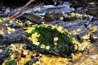 Podzim v Peci pod Sněžkou - Zelený potok