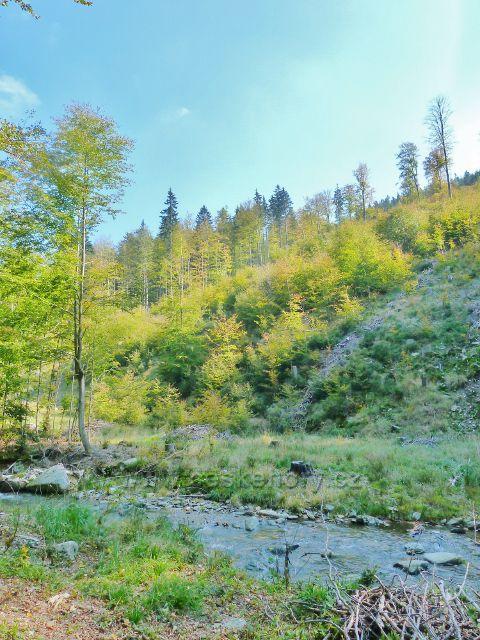Lesní porost na svahu údolí Klepáčského potoka