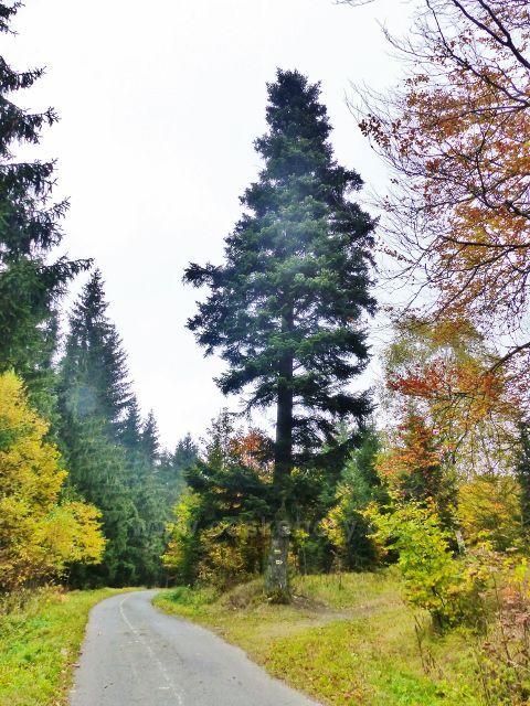 Vysoký Potok - silnička z Horní Orlice na rozcestí Polesí Jeřáb