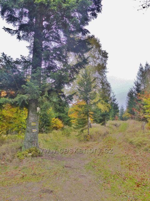 Vysoký Potok - rozcestí Polesí Jeřáb, cesta po žluté TZ ke Svaté Trojici