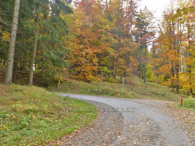 Vysoký Potok - rozcestí u Kalasovy lovecké chaty v zatáčce silničky ze Severomoravské chaty do Vysokého potoku