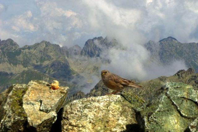 Ptačí výhledy