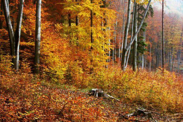 kraj lesa