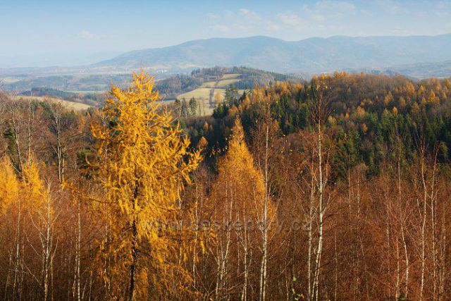 listopad podzimu