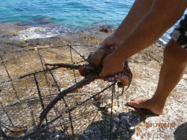 Úlovek místního rybáře.