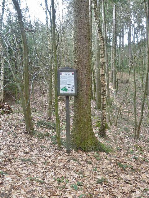 Přírodní památka Les Včelný
