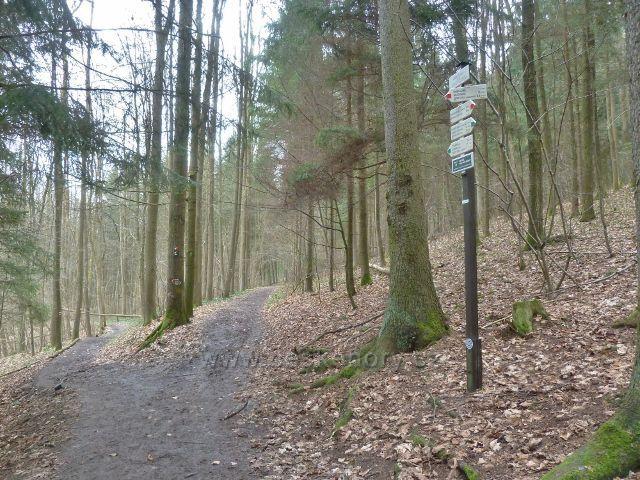 Les Včelný - rozcestí tras po červené a zelené TZ