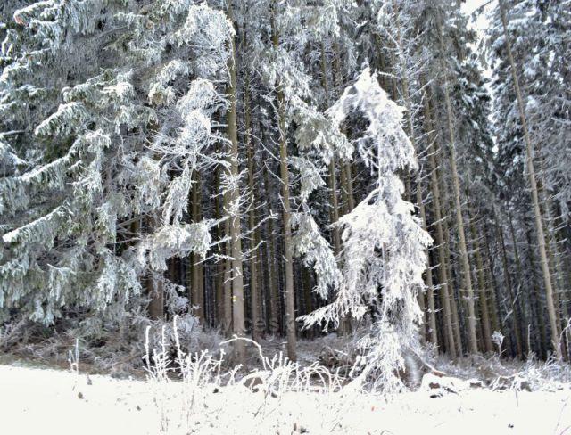 Toulky zasněženou přírodou.