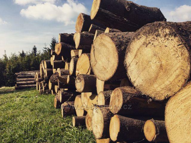 Čerstvě pokácené dřevo