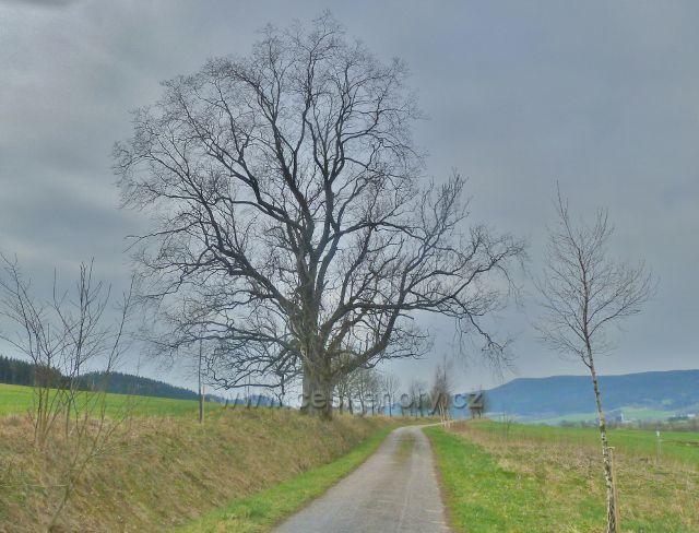 Králíky - Horní(stará) cyklostezka z Králík do Červené Vody