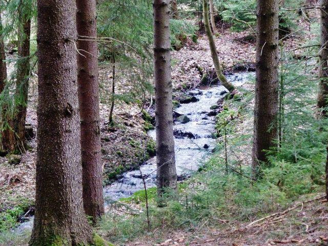 Horní Orlice - část horního toku Tiché orlice