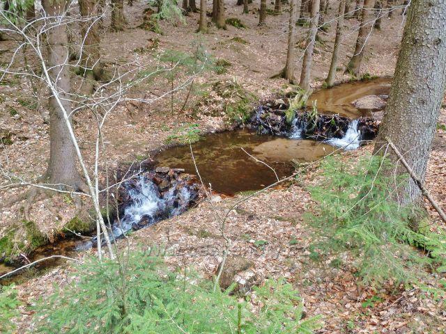 Horní Orlice - horní tok Tiché Orlice prochází lesním porostem