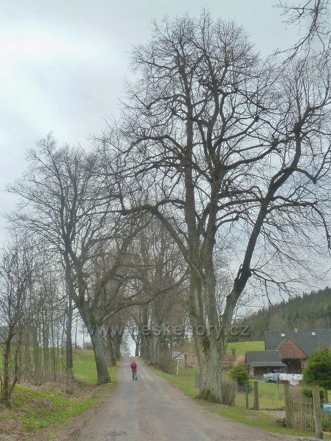 Dolní Hedeč - stromová alej podél silničky do Horní Orlice