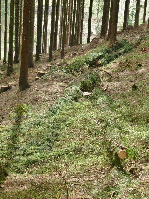 Horní Orlice - lapáky na kůrovce na okraji lesního porostu na úbočí Lískovce