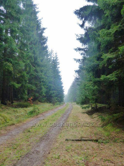 Cesta přes Záhorský les
