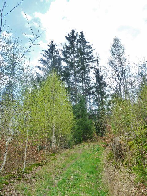 Žamberk - lesní cesta k osadě Kněžství