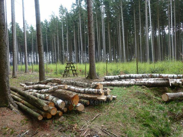 Žamberk - oplocenka v lese nad Dymlovským rybníkem