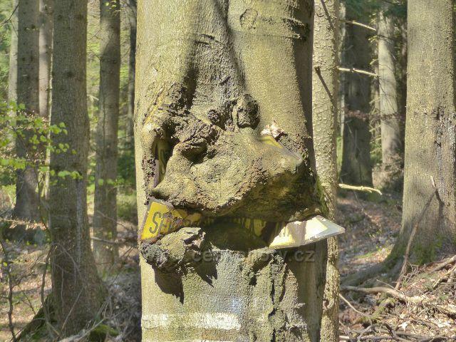 Zarostlá směrovka na Severomoravskou chatu u silničky z Moravského Karlova