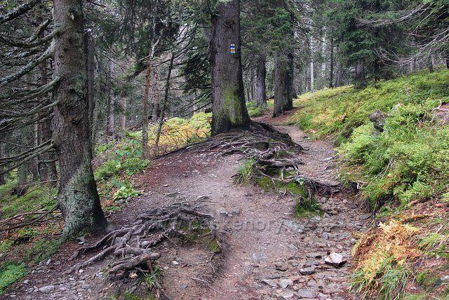 z lesa pod Pradědem