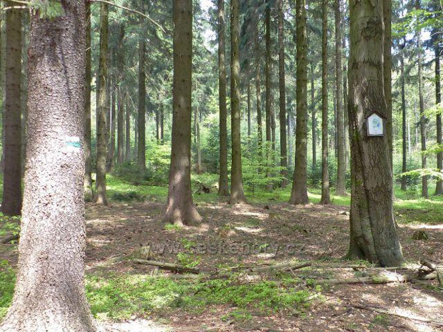 Písařov - místo tragické smrti při kácení stromů v roce 1923 na Čečole