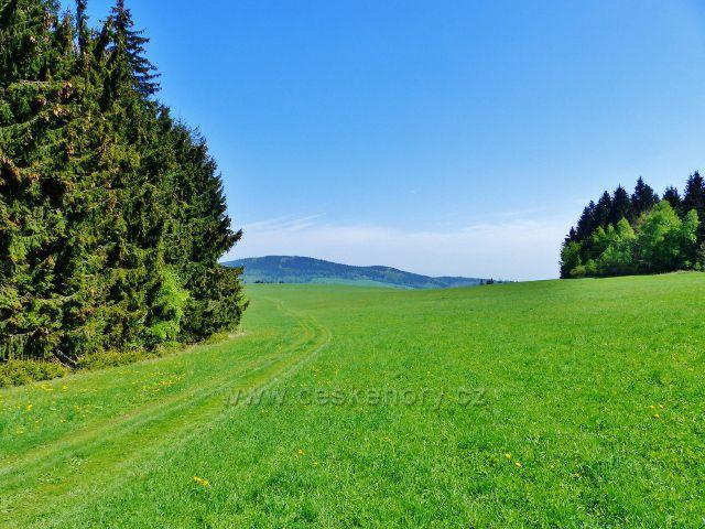Písařov - cesta po zelené TZ na Spálenisko vede podél lesa po pastvině