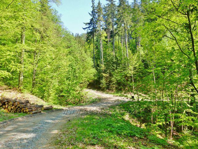 Mlýnický Dvůr - rozcestí před Osikovým lesem, napojení trasy po zelené TZ na lesní silničku