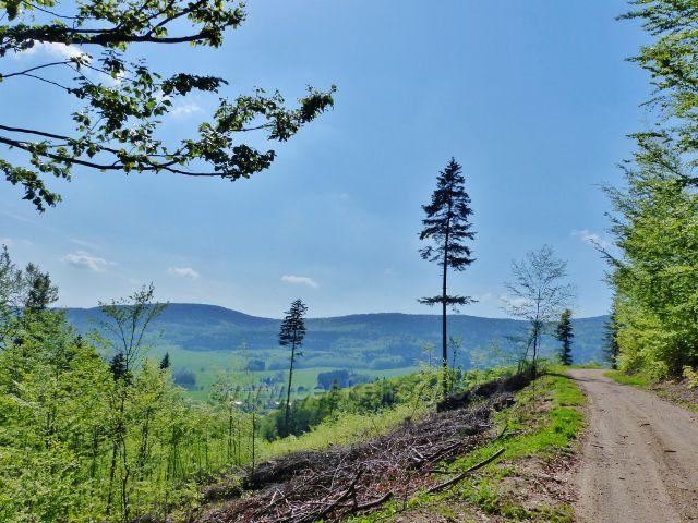 Mlýnický Dvůr - cesta po zelené TZ k rozcestí Osikový les. Vyhlídkové místo