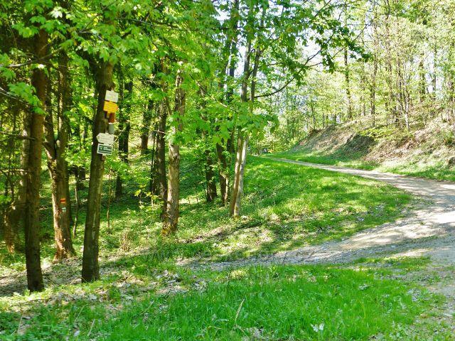 Mlýnický Dvůr - rozcestí Osikový les