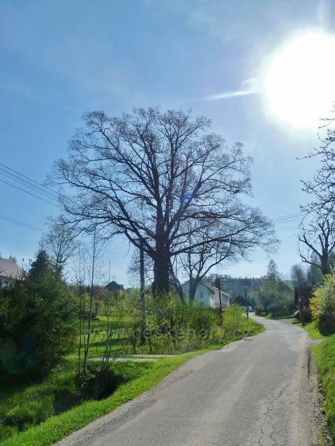Šanov - významný strom v obci