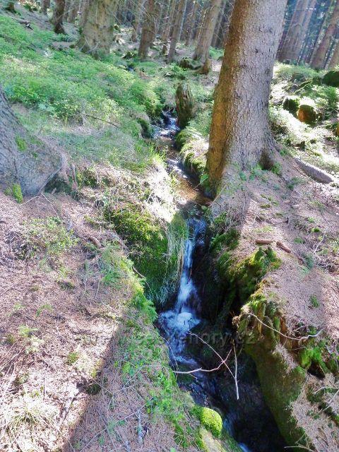 Šanov - lesní potok pod Kamenáčem je jedním z přítoků Tiché Orlice