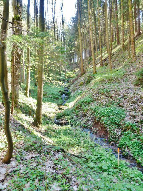 Králíky - Plynárenský potok na úbočí Lískovce