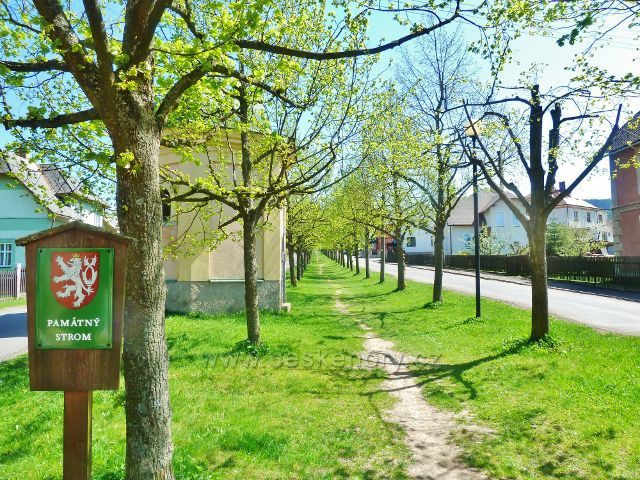Králíky - celá klášterní alej je chráněnou památkou