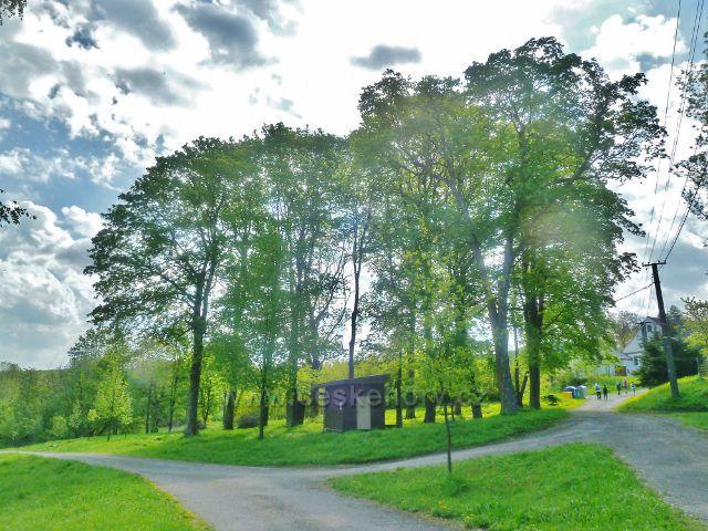 Podlesí - skupina stromů nad stadionem