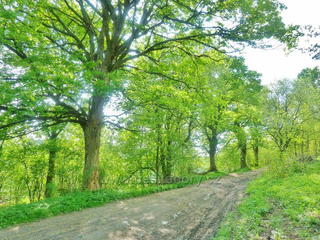 Podlesí - cesta po modré TZ k Severomoravské chatě
