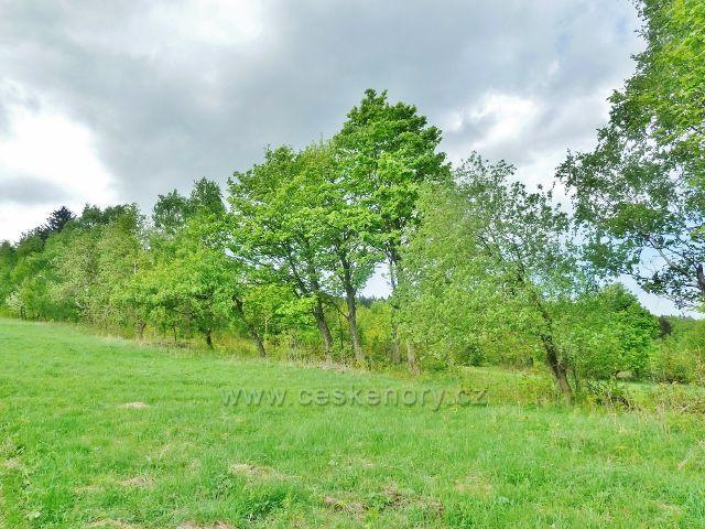 Podlesí - stoupání po úbočí Pohořelce okrajem pastviny po modré TZ k Severomoravské chatě