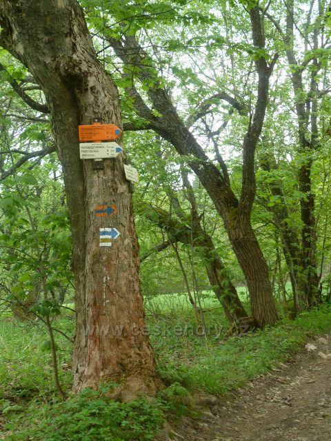 Horní Orlice - turistický rozcestník na žluté a modré TZ nad silničkou do Zlatého Potoku