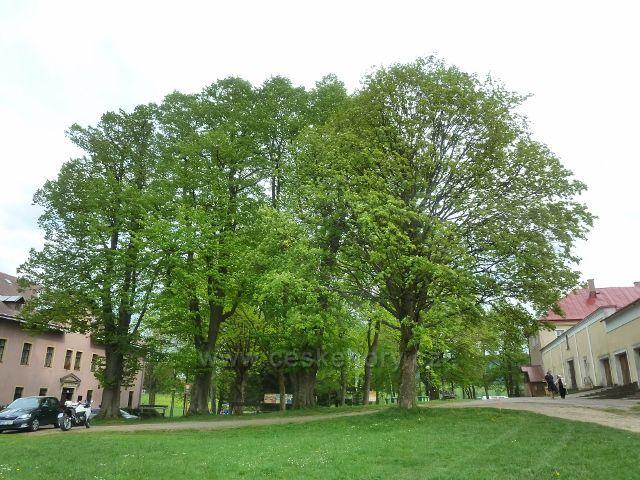 Dolní Hedeč - skupina památných lip v areálu kláštera na Hedeči