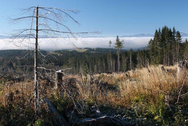 odhalené lesy