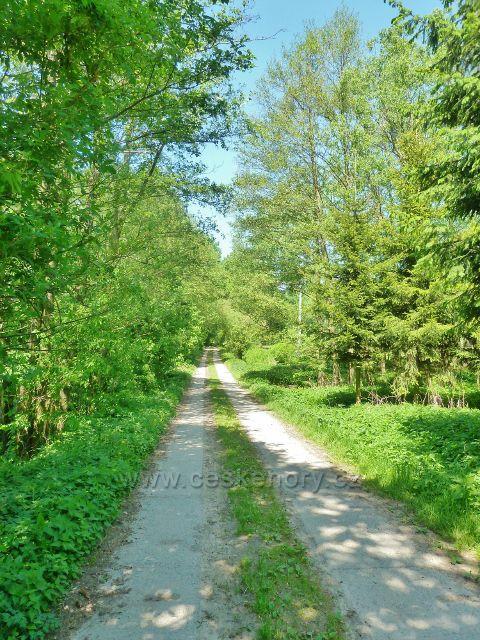 Vikýřovice - polní cesta po žluté TZ do Vikýřovic prochází přes údolí Račího potoka