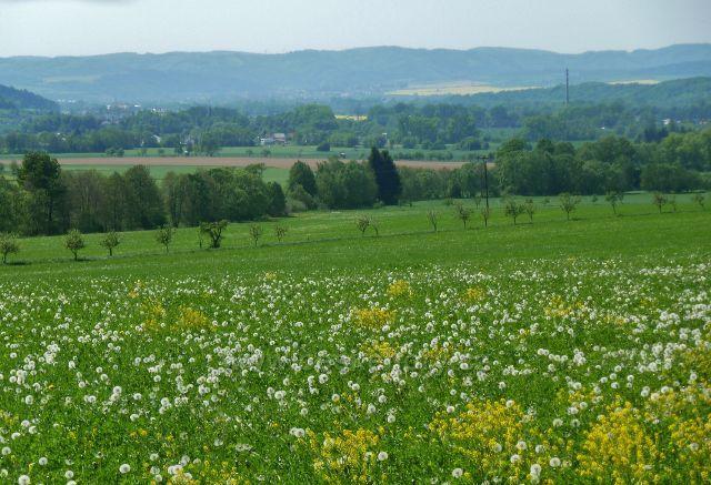 Vikýřovice - pohled z polní cesty do Vikýřovic k Šumperku