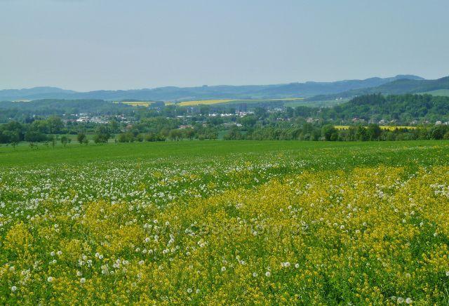 Vikýřovice - pohled přes kvetoucí louku k Šumperku