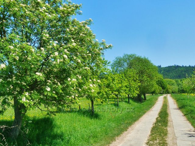 Vikýřovice - trasa do Vikýřovic po žluté tz vede po zpevněné  polní cestě