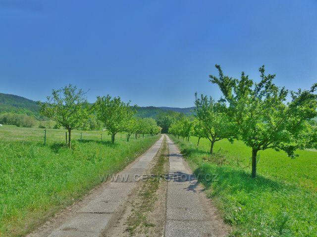 Vikýřovice - zelená TZ od v.n. Krásné do Vikýřovic vede po zpevněné polní cestě