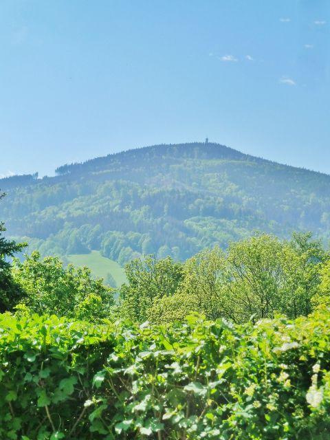 Pohled na Zlatý Chlum(891 m.n.m.)