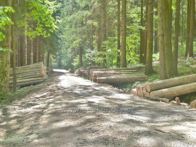Česká Ves - skládky dřeva podél silničky nad potokem Lubina