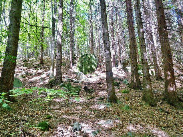 Česká Ves - skalnatý terén lesního porostu na úbočí vrchu Jehlan ( 878 m.n.m.)