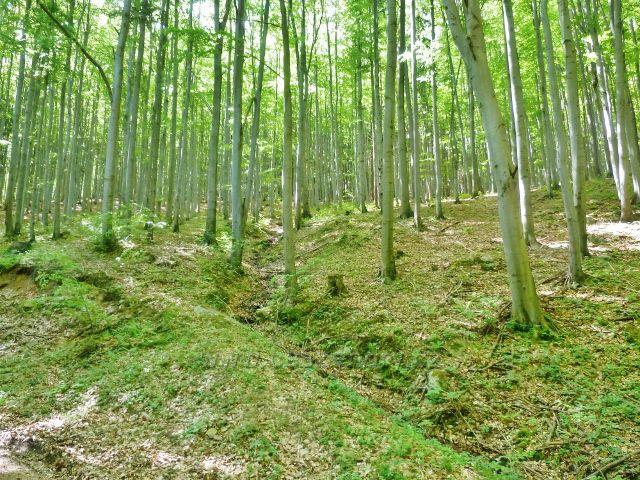 Česká Ves - vyschlé koryto přítoku Lubiny na úbočí vrchu Jehlanu