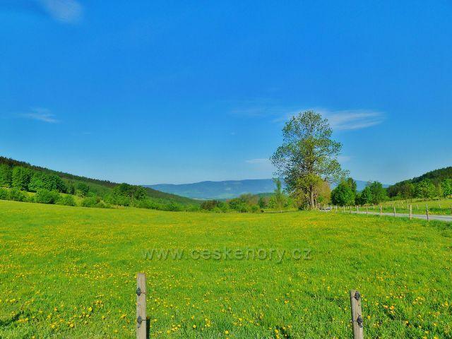Pastviny v Přemyslovském sedle, na obzoru vykukuje masiv Králického Sněžníku