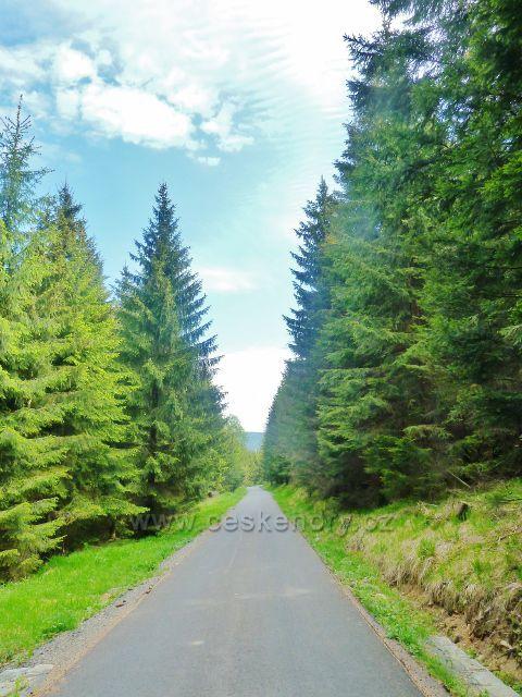 Lesní silnička (cyklostezka 6155) vedoucí z Přemyslovskéhon sedla k Pekařovské cestě