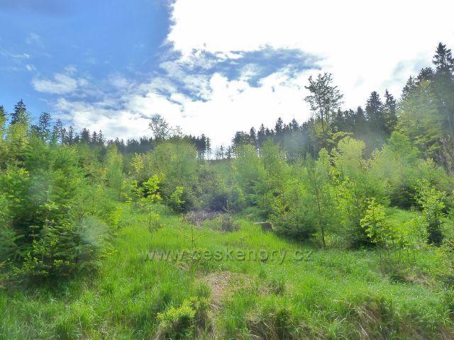 Úbočí Ucháče nad lesní silničkou k Pekařovské cestě
